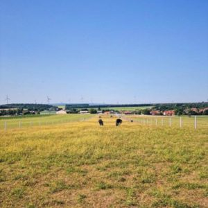 Unser Pferdehot über 130.000m²